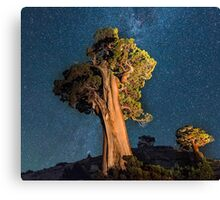 Olmsted Point Canvas Print