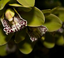 Orchids by palmerphoto