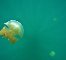 Jellyfish Lake Palau by Randy Richards