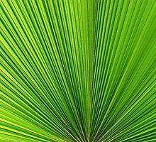 green geometry by Giuseppe Moscarda