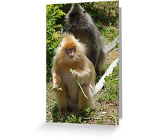 Shadow Monkey Greeting Card