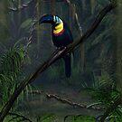 Channel Billed Toucan by Walter Colvin