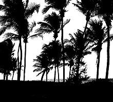 Black Palms by SBCStudio