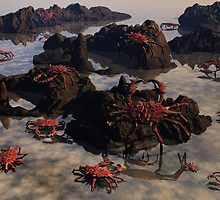 Island Crab by Lisa  Weber