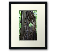 HDR Composite - Milipede and Tree Stump Framed Print