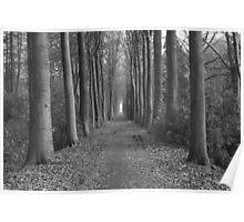 zwart en wit paard in het bos Poster