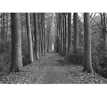 zwart en wit paard in het bos Photographic Print