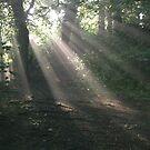 Sunlight 2, Kearsney Abbey woods by FelicityB