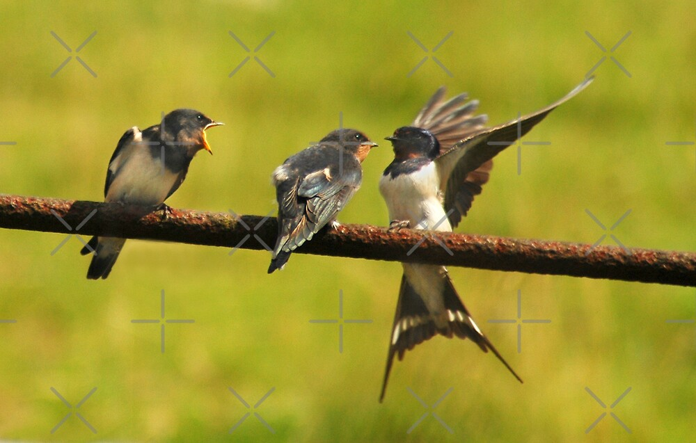 Oi...Get your OWN bird by Stevie Mancini