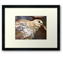 I'm Getting A Brand New Coat For Summer - Juvenile Dove - NZ Framed Print