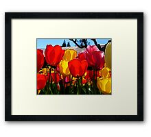 Natures Cups Are Always Full...Tulips - NZ Framed Print