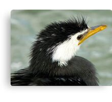 Who Said Eel? - Pied Cormorant - NZ Canvas Print