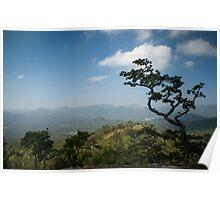 Thekkady Tree Poster