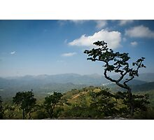 Thekkady Tree Photographic Print