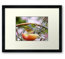 Yum... This Is An Extra Juicy Apple... - Silver-Eye - NZ Framed Print