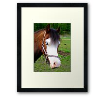Why The Long Face? - Are You Feeling Blue? - Pinto - NZ Framed Print