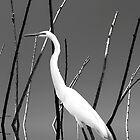Water Bird by Wendy Mogul