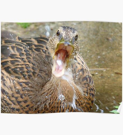 Hey Look!!! I Can Catch Water... Mallard Duckling - NZ Poster