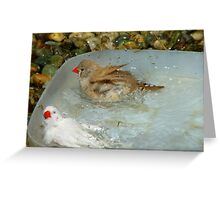 Have You Ever Seen A Zebra Bathing? - Zebra Finches - NZ Greeting Card