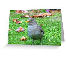 I Could Be A Collectors Item... - Blackbird - NZ Greeting Card