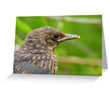 Oops.. Do I Have Egg On My Face? - Fledgling Blackbird - NZ Greeting Card