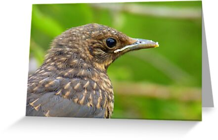 Oops.. Do I Have Egg On My Face? - Fledgling Blackbird - NZ by AndreaEL