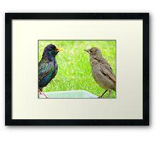 Monkey See, Monkey Do... - Starlings - NZ Framed Print