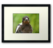 Did You Bring A Fresh Grub? - Baby Magpie - NZ Framed Print