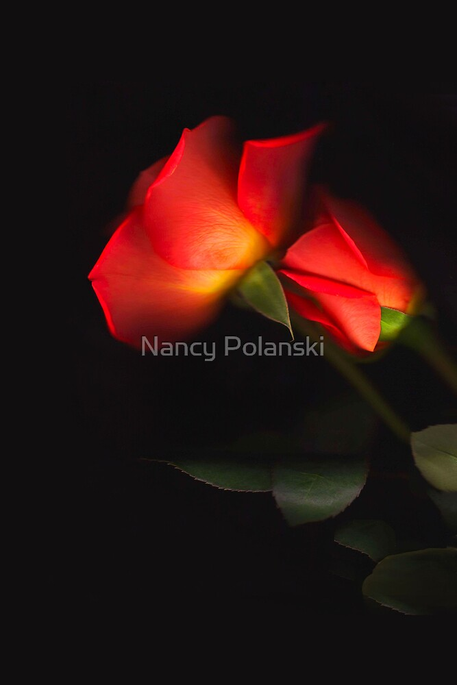 Perfectly Roses by Nancy Polanski