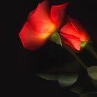 Perfectly Roses by Nancy Polanski