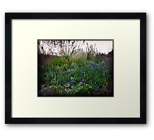 Lupin Serenity Framed Print