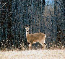deer by frosty1
