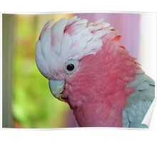 I'm In The Pink - Galah - NZ Poster