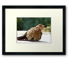 If I Sunbathe Long Enough I'll Turn Into A Blackbird - NZ Framed Print