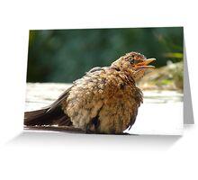 If I Sunbathe Long Enough I'll Turn Into A Blackbird - NZ Greeting Card