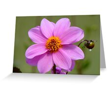Dignity And Grace - Pink Dahlia - NZ Greeting Card