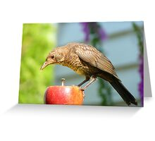 I'm Not In The Mood To Share This One!! - Juvenile Blackbird - NZ Greeting Card