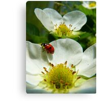 The Strawberry Lady... - Ladybird On Strawberry Flower - NZ Canvas Print