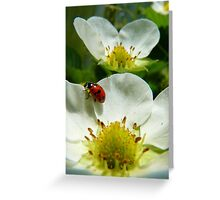 The Strawberry Lady... - Ladybird On Strawberry Flower - NZ Greeting Card