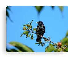 My Beautiful Technicolor Dream-coat - Starling - NZ Canvas Print