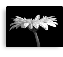 Under the Gerbera Canvas Print