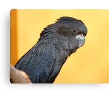 Black Is Black... I Want My Baby Back... - Black Cockatoo - NZ Canvas Print