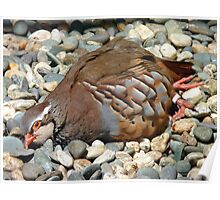 "Did You Not See The ""Do NOT Disturb Sign?""!! - Partridge - NZ Poster"