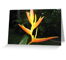 Heliconia Heaven Greeting Card