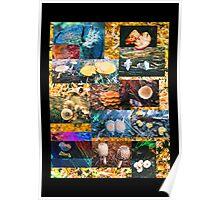 Fungi Fantasia Collaboration Poster