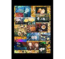 Fungi Fantasia Collaboration Photographic Print