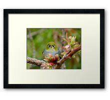 I Am NEVER Grumpy!!! - Silver-Eye - NZ Framed Print