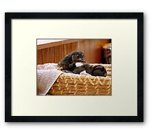 Hey!! I'm A Gift In A Basket... Chick - NZ Framed Print