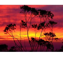 Silhouetted Gum......... Photographic Print