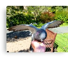 Great... A Hand Of Food!!!! - Pigeon - Dunedin Canvas Print